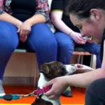 Staffie Puppy Training