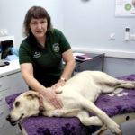 Labrador Massage